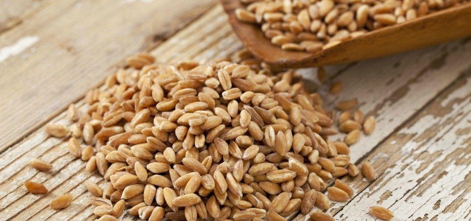 Farro tutte le proprietà e i benefici del grano più antico