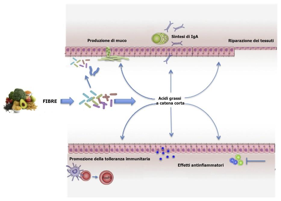 Fibre e microbiota